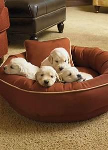 the 607 best images about pampered pets on pinterest With dog beds for aggressive chewers