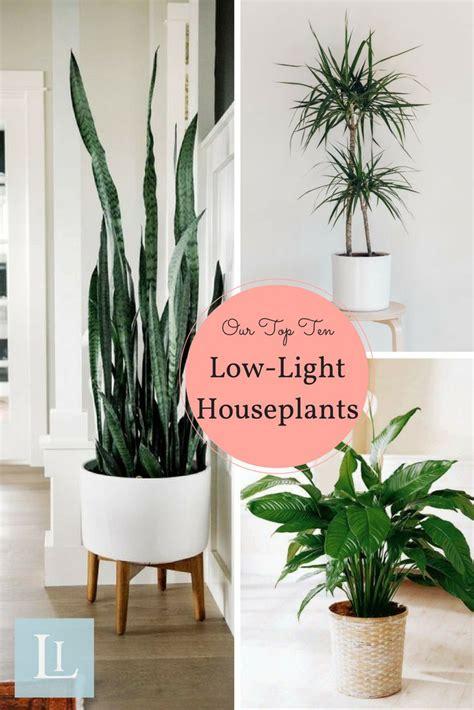 desk plants that don t need sunlight small indoor plants for bedroom floors doors
