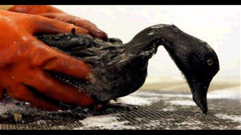spills affecting marine