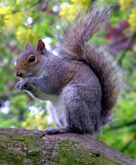 fried squirrel a bountiful kitchen