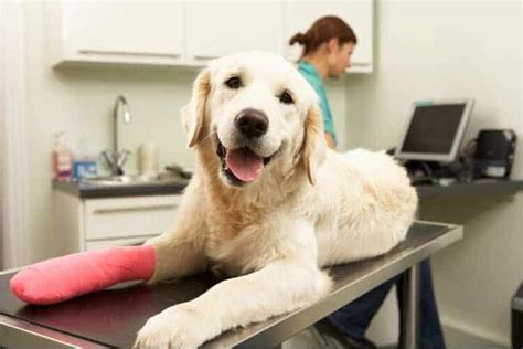 We've compiled the best of the best of 2021 to help! The 5 Best Pet Insurance Plans for Dogs, Puppies of 2020 - Pet Life Today