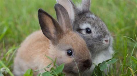 Kaninchen Haltung Grundlagen  Frag Mutti