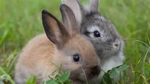 Kaninchenkäfig Für 2 Kaninchen : kaninchen haltung grundlagen frag mutti ~ Frokenaadalensverden.com Haus und Dekorationen
