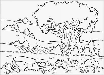 Scenery Coloring Pages Hills Fields Jesus Christmas
