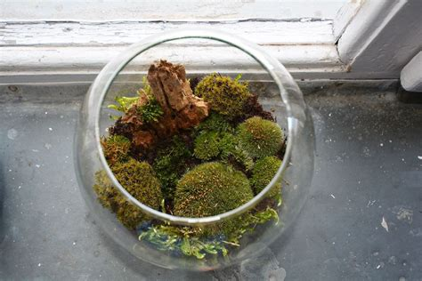 25 best moss for century top 28 how to moss terrarium moss terrarium wine