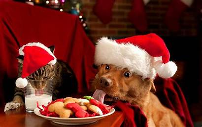 Christmas Dog Wallpapers Dogs Cats Xmas