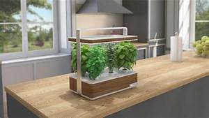 Mini Potager D Intérieur : mettez vous au vert avec basile le potager aromatique d ~ Dailycaller-alerts.com Idées de Décoration