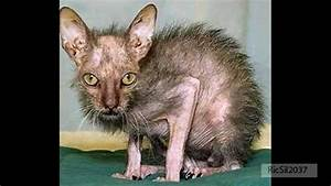 Ugly animal pictures found on the internet - YouTube