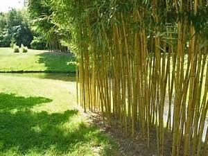 Bambus Pflanzen Sichtschutz : home decor tips bambus pflanzen ~ Sanjose-hotels-ca.com Haus und Dekorationen