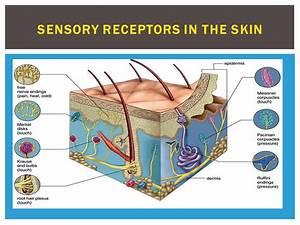 Senses Part ppt video online download