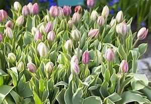 Jardinería Archivo del blog Plantar bulbos para que florezcan en primavera
