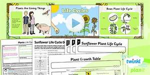 Science  Plants  Life Cycles Year 2 Lesson Pack 3