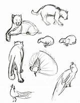 Tick Tock Cat Coloring Cats Drawing Drawings Sketches Template Croc Sketch Animals sketch template