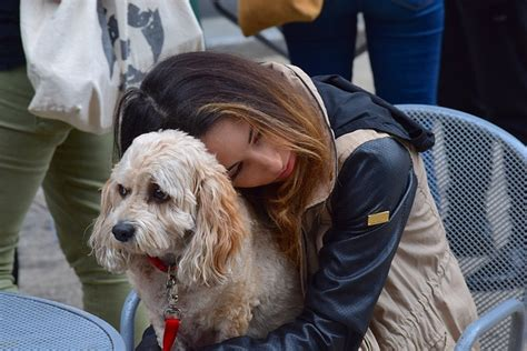 Emotional Support Dogs  A Step By Step Guide  Esa Doctors