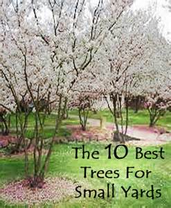 10 best trees for small yards diy