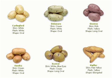 different types of potatoes recipes potato advice please brisbane local food