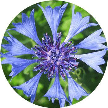 types of blue flowers different types of blue flowers www pixshark com images galleries with a bite