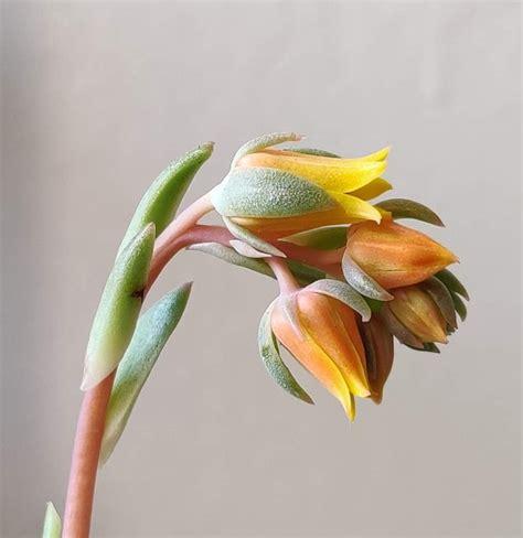 เพิ่... - Cactus&Succulent Banphai ขายแคคตัสและกุหลาบหินนำเข้า