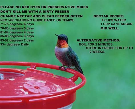 avoid  dead hummingbird   garden