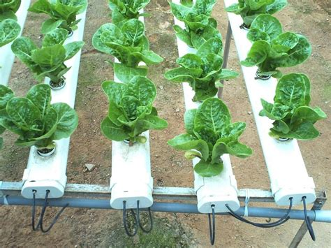 green million agrisolution ent  produk green