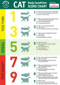 cat weight chart greencross vets news
