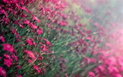 Flowers Field Wallpapers Nature Screen Flower Background