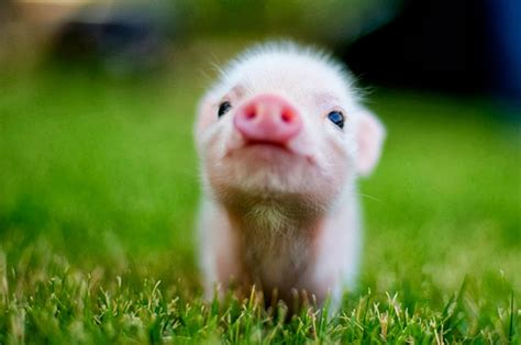 baby animal pictures wallpapers  wallpapers adorable