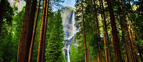 Yosemite Westgate Lodge Lowest Rates Online Our