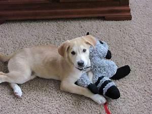 Husky Mix - Dog Training Home | Dog Types