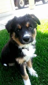From reddit: So my brother just got a puppy! Border collie ...