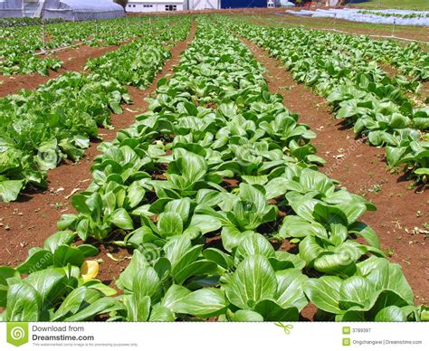 vegetable farm pictures vegetables farm stock image image of irrigate