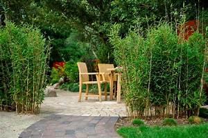 Bambus Im Garten : bambus im garten ~ Michelbontemps.com Haus und Dekorationen
