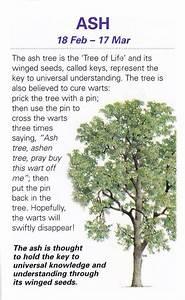 Celtic Tree Astrology On Tumblr