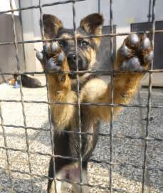 Animal Shelter Found Dogs