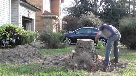 Removing Trees From Backyard by Removing Front Yard Oak Tree