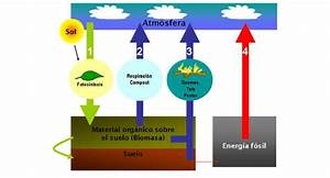 Carbon Cycle  Sources Of Co 2 Emissions And Co 2 Sinks