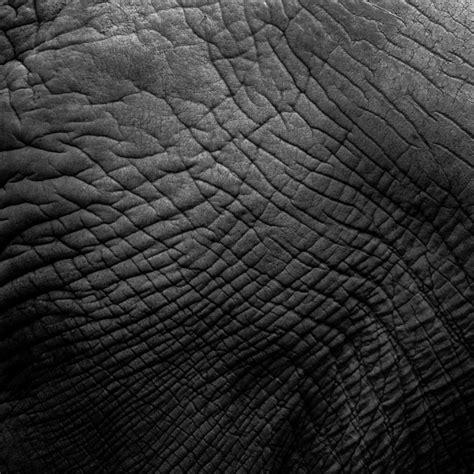 elephant skin texture  stock photo public domain
