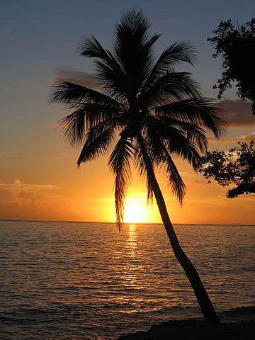 filesunset  coconut palm tree fijijpg wikimedia