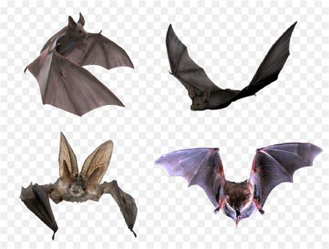 flight microbat halloween halloween bats png