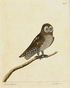 752 best NATURAL HISTORY - BIRDS images on Pinterest ...