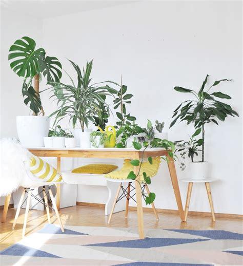 pflanzen für wohnung die besten zimmerpflanzen f 252 r die wohnung bonny und kleid