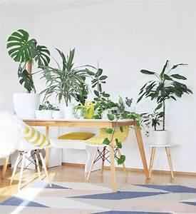 Pflegeleichte Pflanzen Für Die Wohnung : schatten zimmerpflanzen die besten zimmerpflanzen f r die ~ Michelbontemps.com Haus und Dekorationen