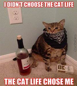Cat Goes Thug Memes. Best Collection of Funny Cat Goes ...