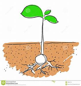 15 Growing Plant With Roots Vector Images - Seed Growing ...