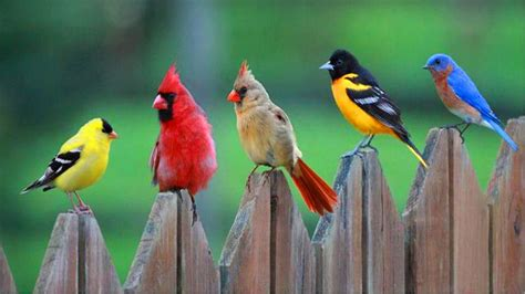 Wallpaper Animals And Birds - birds of a feather wallpaper and background image