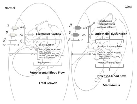 role  placenta   fetal programming