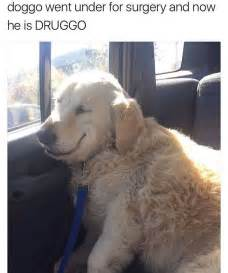 Wholesome Dog Memes