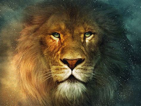the lion aslan from the chronicles of narnia desktop wallpaper