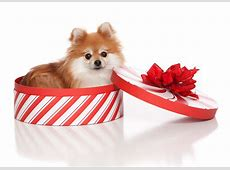 The Dog Trainer Do Puppies Make Good Christmas Gifts