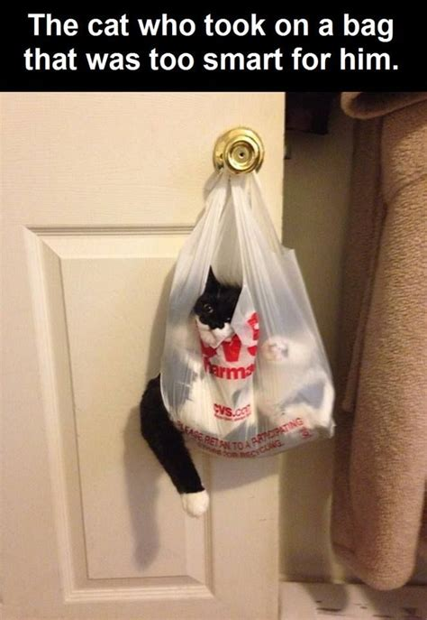 cat stuck   bag pictures   images
